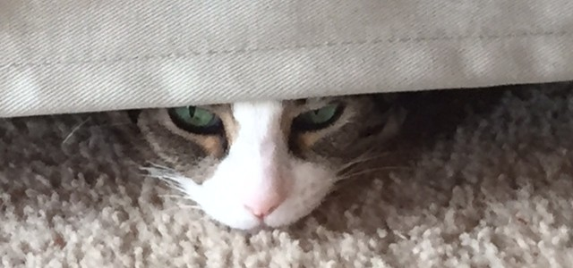 cat under couch