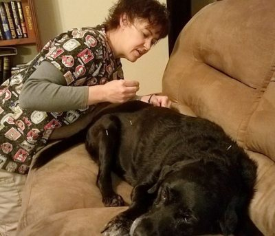 veterinarian acupuncture dog