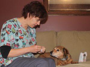 belleville vet acupuncture