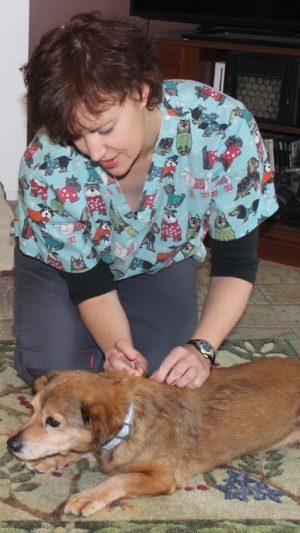 veterinary acupuncture needing dog