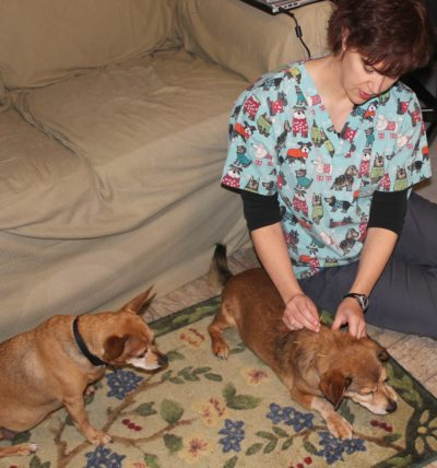 glen carbon vet, edwardsville acupuncture vet