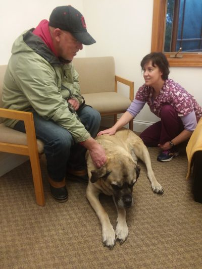 belleville dog acupcunture