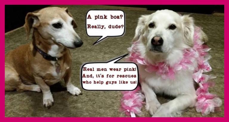 dog wearing pink boa