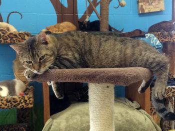 cat home veterinarian
