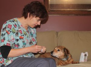 belleville vet acupuncture