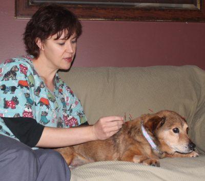 Veterinarian acupuncture dog, needling dog